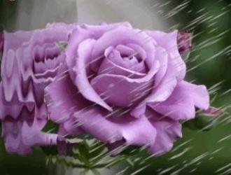 864c09af26d51d74201d232fc2a4cf07--animated-gifs-rosas-roxas